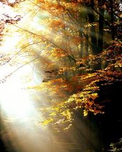automne-par-pixabay
