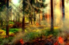 sous-bois 2015 par pixabay