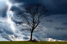 arbre dans la tempête, par pixabay